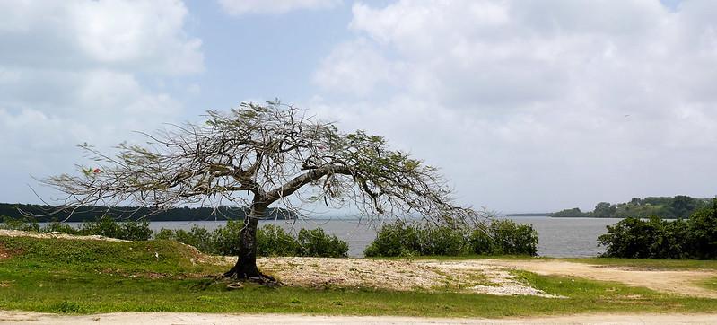 Sur les côtes de Guadeloupe 16727552864_fd806db141_c