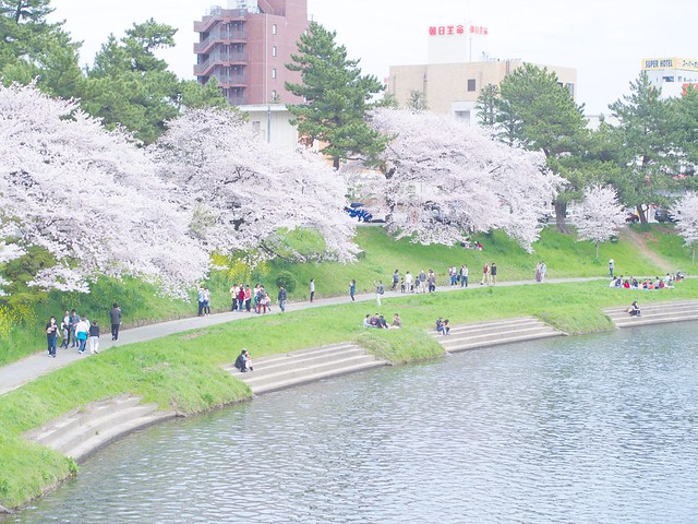 150404_Sakura_and_ 6