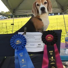 Guess who had the best day ever!! My Impossible Dog not only got his first ever tournament Q by actually making time in Grand Prix, but he WON the class!! And with a little help from some awesome people, we managed to get enough dogs for 2 SuperQs and Dax
