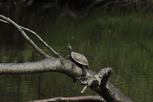 lézards et autres reptiles 16980590977_dded5eb9d5