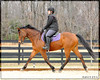 Working on transitions within the gaits