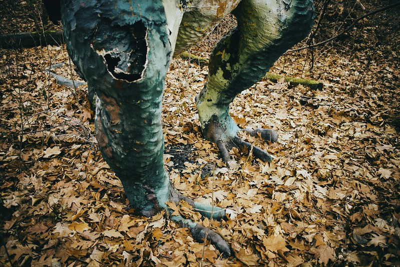 Prehistoric Forest: Legs to Stand On