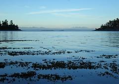 Evening at Bennett Bay