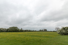 Buttercup field showing ridge and furrow