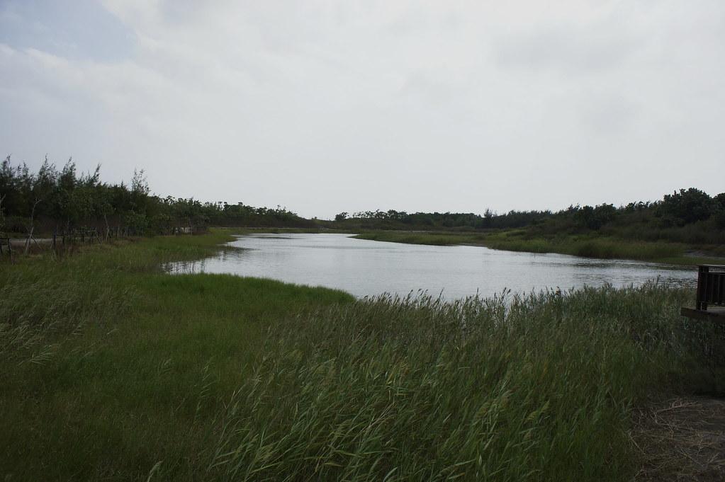 東石鰲鼓濕地 (7)