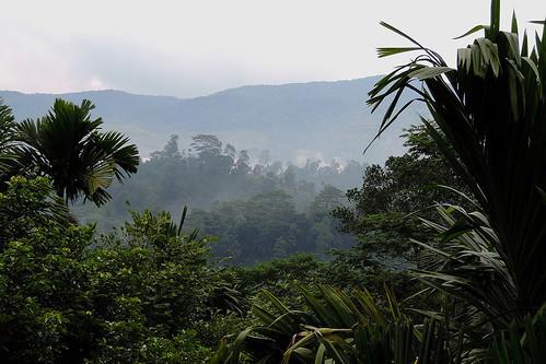 travel ceylon jungle forest rainforest deniyaya lodge rainforestlodge hotel vegetation foliage nature humidity outdoor lanscape plant plants palmtrees palmtree srilanka southasia