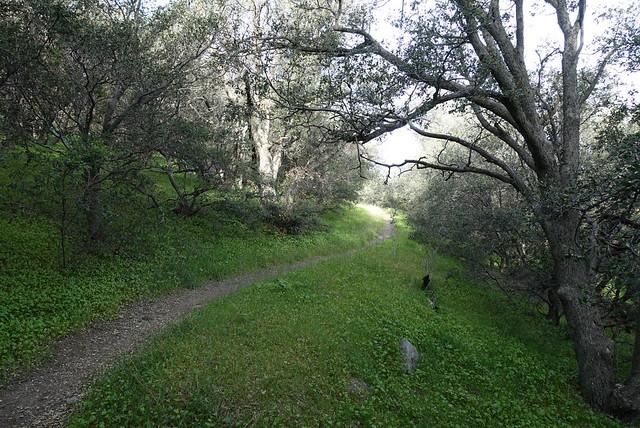 Oak grove, m462