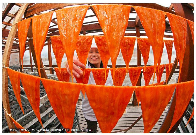 石川県 珍味育てる能登の寒風 くちこ作り、七尾で最盛期|北陸新幹線で行こう!北陸・信越観光ナビ - Mozilla Firefox 4162015 113608 PM