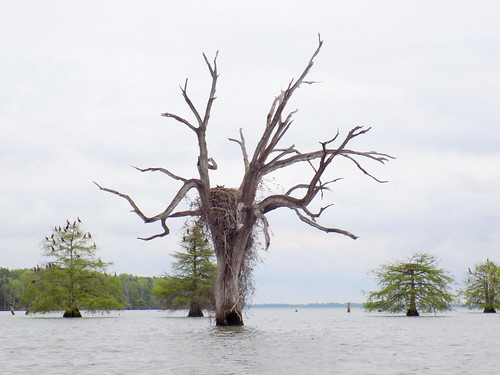 Lake Marion Plantation Islands-20