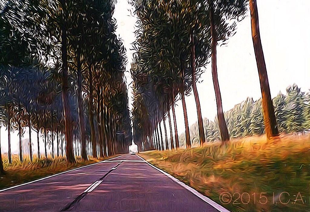 Street. Trees. Oostende (Gistel), Belgium