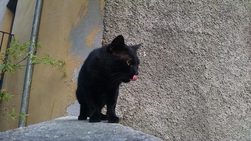 Black Cat, Barcelona
