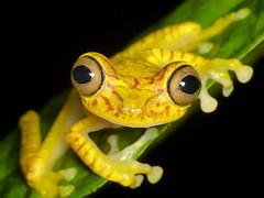 Amphibians of Ecuador