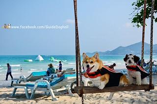 พาน้องหมาไปนอนสมุย ที่พักติดหาดเฉวง ปิดทริปเที่ยวใต้วันที่7