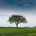 Wonerful tree by Mi Ko