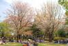Photo:IMG_0678_680 国営昭和記念公園 HDR By vicjuan
