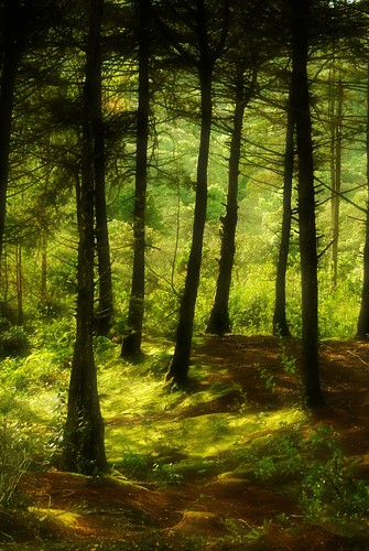 green nikon soft bosque medellin antioquia