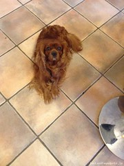 Fri, Apr 24th, 2015 Lost Male Dog - The Local Area, Lucan, Dublin