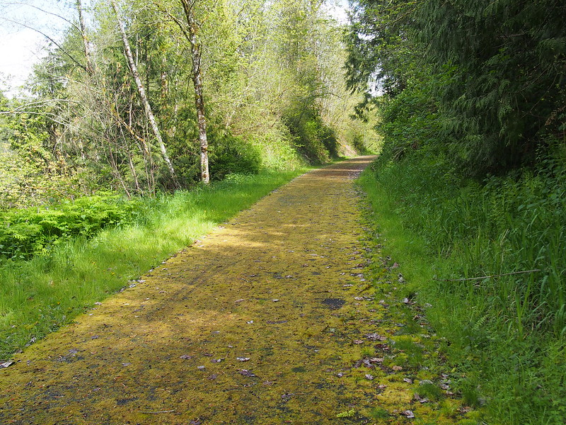 Foothills Trail: Covered in moss due to disuse