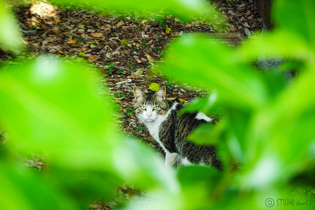 Today's Cat@2015-05-14