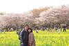 Photo:IMG_1096 国営昭和記念公園 花畑 By vicjuan