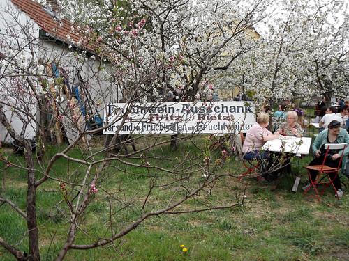 """Schild """"Fruchtwein-Ausschank von Fritz Rietz"""" - 136. Baumblütenfest Werder 2015"""