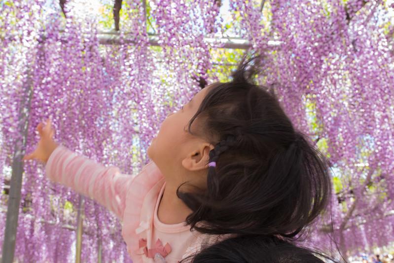 ashikaga_flowerpark-12