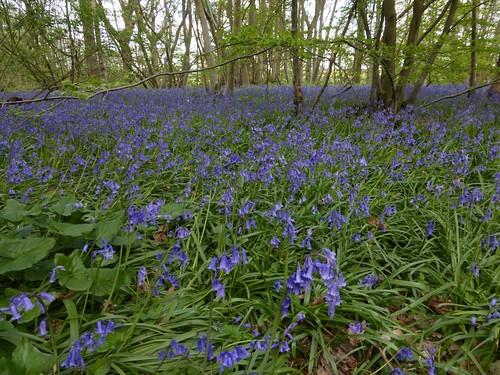 North Downs Way near Cuxton