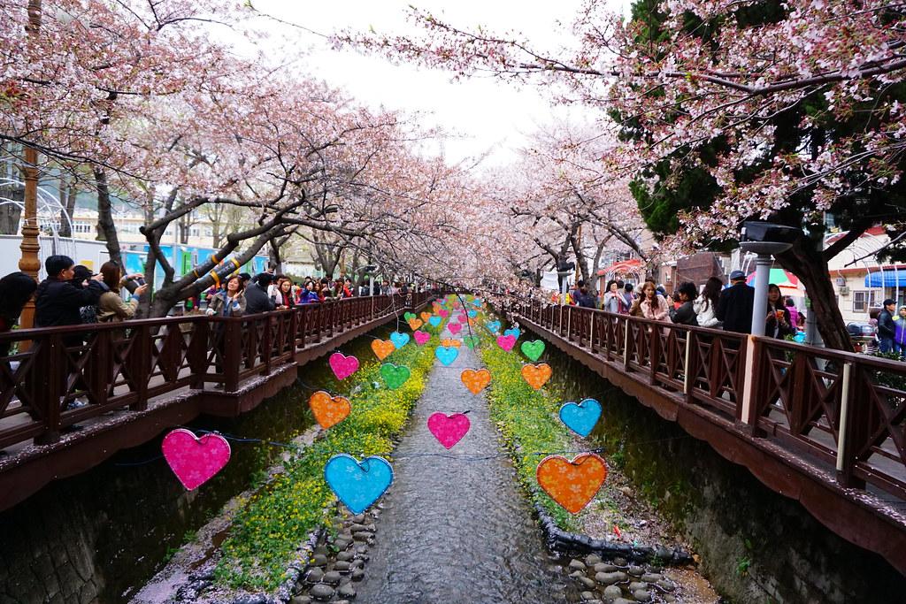 余佐川橋 (2)櫻花與裝飾實在令人陶醉
