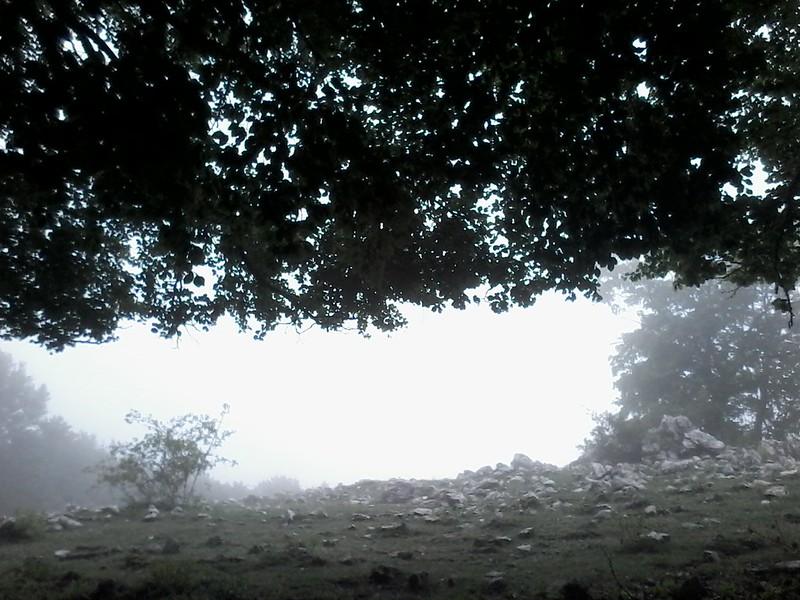 Pellecchia tra le nubi