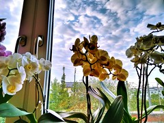 Orchids and Clouds