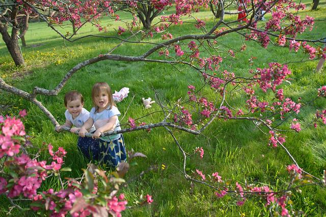 CrabApple Arboretum-19
