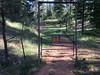 2016/366/148 Forest Doorway