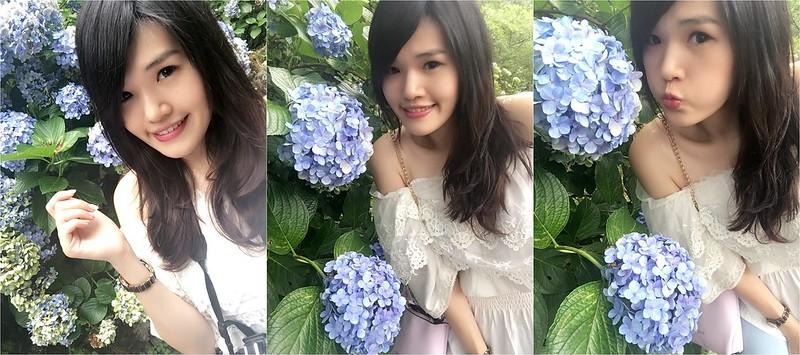 繡球花 (28)
