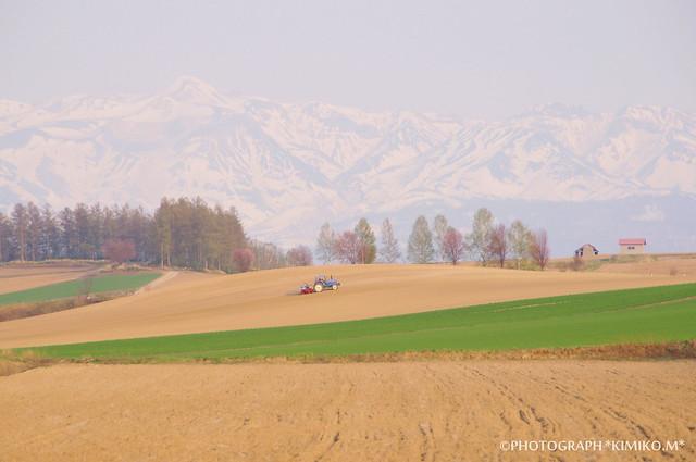 桜のある丘風景1