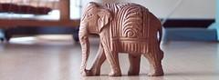 cropped-elephant3