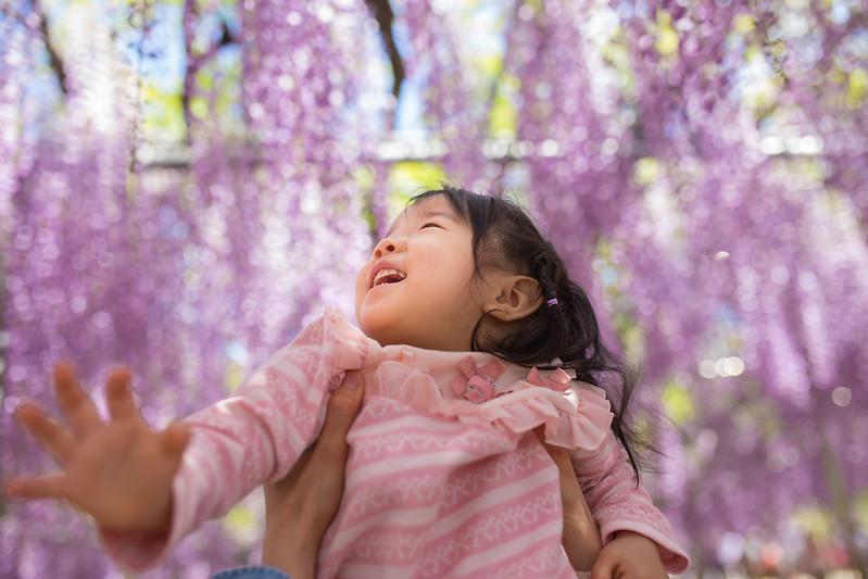 ashikaga_flowerpark-11