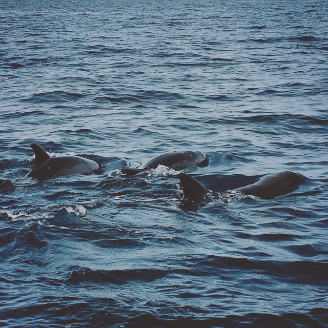 Early Monday meeting with my three amigos (and 30-50 or so of their equally darling mates) 😍☀️🐬🐬🐬 #dolphinwatch #bohol #islandfun #funinPH