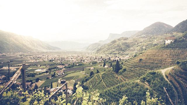 Winewood Hills