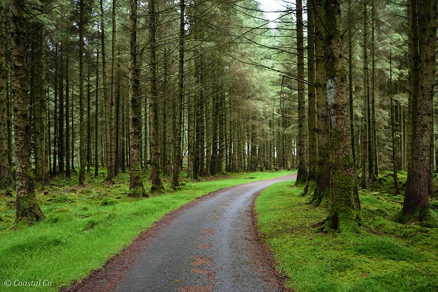 The Woods at Dinas Reservoir