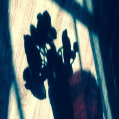 Day 4, Shadows. #aprillove2015