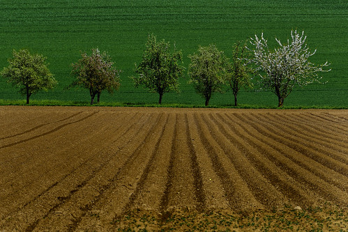 Gepflugtes Feld mit Obstbäumen