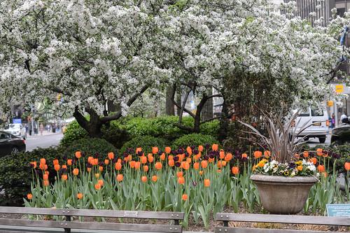 FilipWolak-LSBID-Tulips-6576