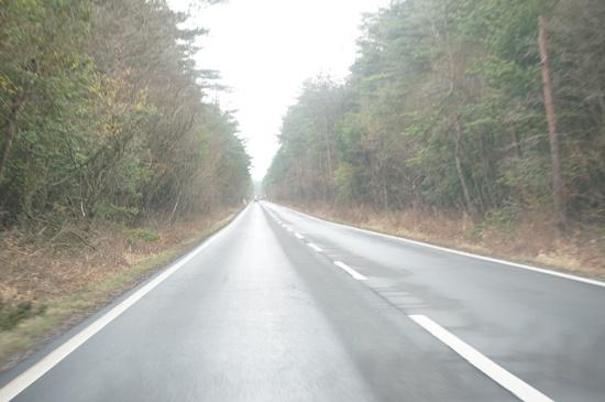 forestadventure1