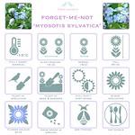 Forget-me-nots myosotis sylvatica