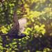 From My Garden… by Samantha Nicol Art Photography