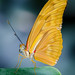 The Butterfly Effect: Part One by Brandon_Hilder