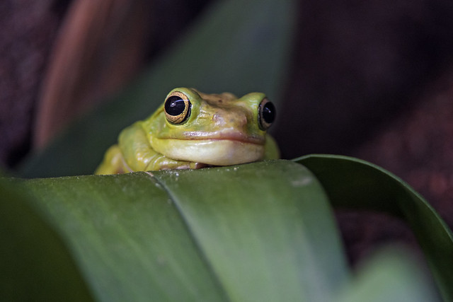 Pretty frog on the leaf