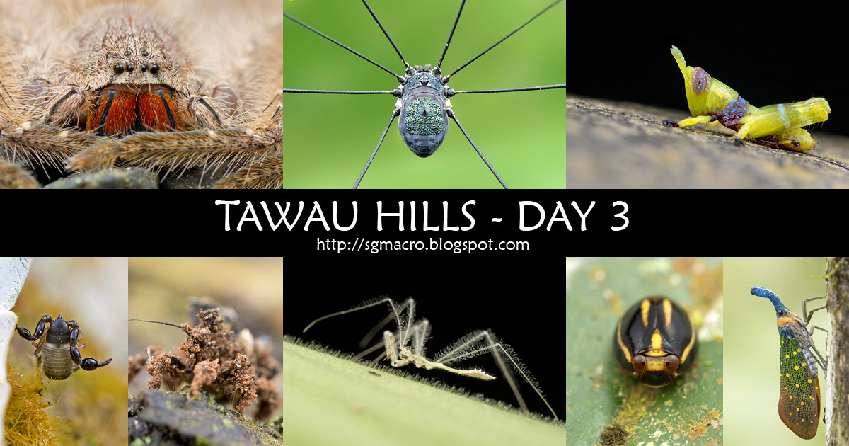 Tawau Hills - Day 3