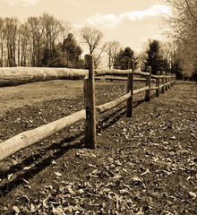 Afternoon Fence Line