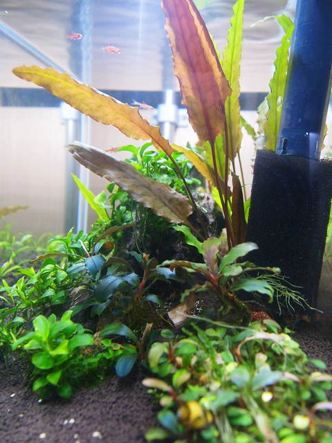 Nano scape with low or totally no maintenance plants for Plants that require no maintenance